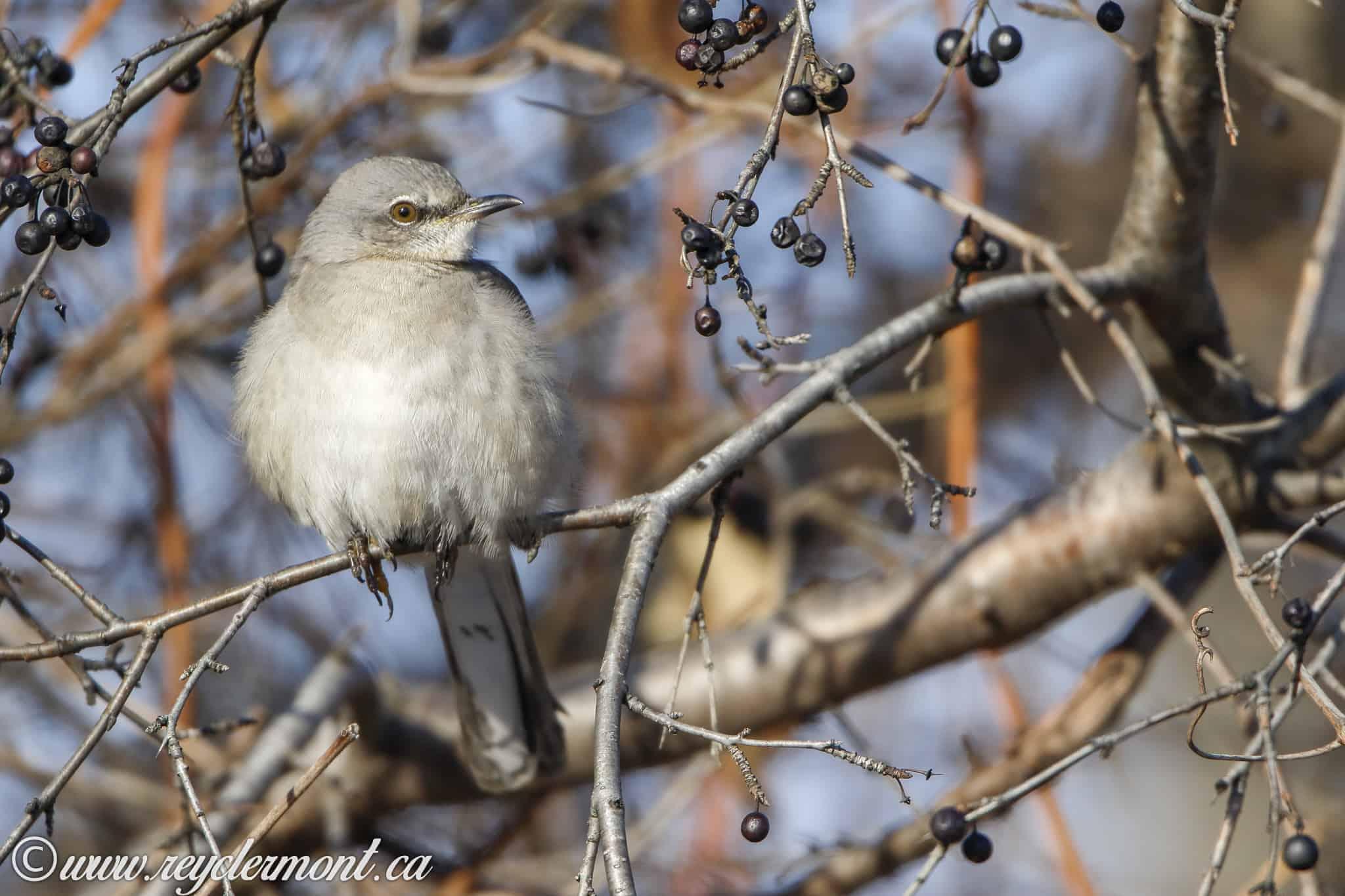 Avicourse d'hiver – 8 décembre 2018